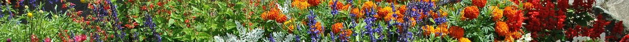 Květiny :-)