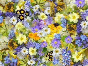 venkovní květiny