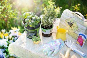péče o bylinky